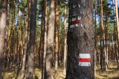 Hiking trail sign on a tree. Red an white hiking trail sign on a tree Royalty Free Stock Photography