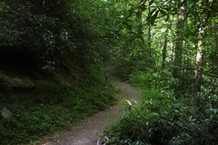 Hiking trail in Smoky Mountains Royalty Free Stock Photo