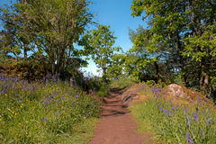 Hiking Trail Through Spring Flowers on Sunny Day Royalty Free Stock Photography