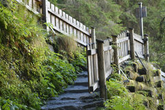 Hiking trail with stairs Stock Photo