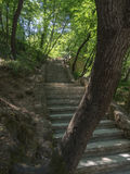 Hiking trail with stairs through a forest in Krka National Park in Croatia Royalty Free Stock Photography