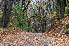 Hiking trail with strewn leaves in the autumn forest Royalty Free Stock Images
