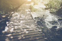 Hiking Trail with Sunlight Royalty Free Stock Photo