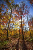 Hiking trail in sunny fall forest. Autumn trees with colorful leaves in fall forest and hiking trail at Algonquin Park, Ontario, Canada royalty free stock images