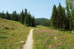 Hiking trail in sunshine meadows royalty free stock image