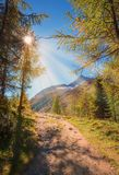 Hiking trail in the swiss alps. With sunburst through larch trees in autumn Royalty Free Stock Photos
