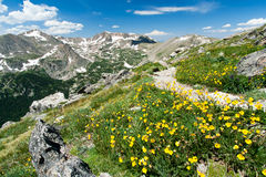Hiking Trail Through Flowers Of Colorado Mountains Royalty Free Stock Photo