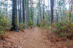 Hiking Trail to the Aldridge Saw Mill. In Angelina National Forest located in East Texas stock image