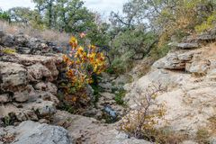 Hiking Trail to the Pedernales River on the Reimers Ranch in Texas. Through the ferns and along the creek past caves and cliffs royalty free stock photo