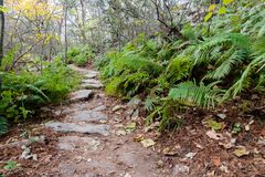 Hiking Trail to the Pedernales River on the Reimers Ranch in Texas. Through the ferns and along the creek past caves and cliffs stock photos