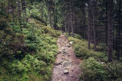 Stolowe Mountains in Poland. Hiking trail to rock formations called White Rocks in Table Mountains in Sudetes, Poland Royalty Free Stock Photography