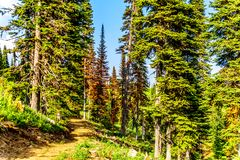 A hiking trail at Sun Peaks in British Columbia,Canada stock photography