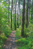 Hiking Wood Trail or Track Royalty Free Stock Photo