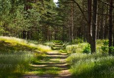 Hiking trail trough the forest Stock Photography