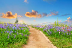 Hiking trail with wild flowers and sunset. Stock Photos