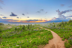 Hiking trail with wild flowers and sunset. Royalty Free Stock Photo