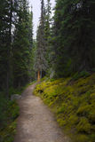 Hiking Trail in the Wilderness. Watch out for bears Royalty Free Stock Images