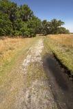 Hiking trail winding through Florida scrub at Lake Kissimmee Par Stock Image