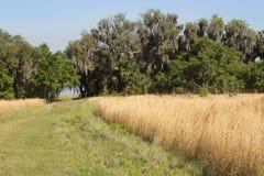 Hiking trail winding through Florida scrub at Lake Kissimmee Par Stock Photos