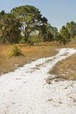 Hiking trail winding through Florida scrub at Lake Kissimmee Par Royalty Free Stock Image