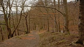 Walkig trail through an Ardennes forest. Hiking trail through a winter deciduous Ardennes forest in Liege, Belgium Royalty Free Stock Photos