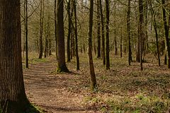 Hiking trail in a winter forest in Ardennes. Liege, Belgium Royalty Free Stock Photography