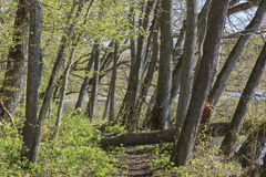 Hiking trail in woods Stock Images