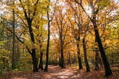 Hiking trail in woods in fall, Netherlands Royalty Free Stock Photo