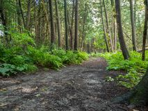 Hiking Trail In The Woods. Path in the forest Stock Photo