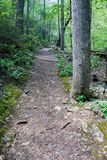 Hiking Trail in the Woods Royalty Free Stock Photography