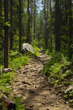 Hiking Trail in the Woods royalty free stock image