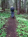 Hiking a trail through the woods n Oregon royalty free stock image