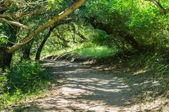 Hiking trail, San Francisco bay area, California. Hiking trail through the woods of Rancho San Antonio County Park, Santa Cruz mountains, Cupertino, Santa Clara royalty free stock photo