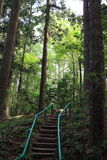 Hiking trail with steps through forest Stock Image