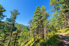 Hiking Trail in Wyoming Royalty Free Stock Photo