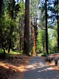 Hiking trail in Yosemite National Park Stock Images