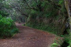 Hiking trails along levadas to Risco fountain on Madeira. Hiking trails along levadas to Risco fountain on Portuguese island of Madeira stock photography