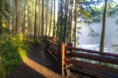 Hiking Trails at Lower Lewis River Trail in Washington state Stock Image