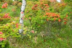 Hiking trails dand Rengetsutsuji Royalty Free Stock Images