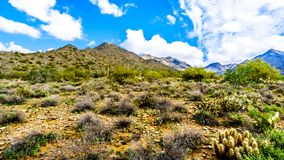Hiking on the hiking trails surrounded by Saguaro, Cholla and other Cacti in the semi desert landscape of the McDowell Mountains. Hiking on the hiking trails stock photos