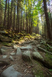 Hiking Trails Through Giant Redwoods Stock Photos