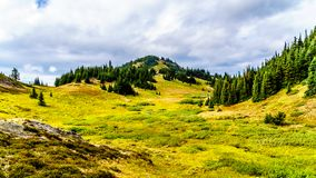 Hiking trails on Tod Mountain near the village of Sun Peaks of British Columbia, Canada. Hiking through the alpine meadows in fall colors on Tod Mountain near stock image