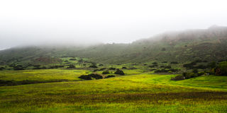 Hiking Trails at Wildwood Regional Park on a Foggy Day Stock Photo