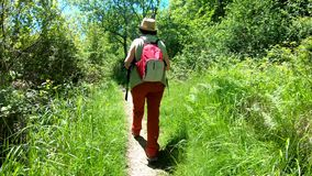 Hiking trekking in the mountains. Rear view of the back of  woman walking along the way with a backpack. Hiking trekking in the mountains. Rear view of the back stock footage