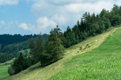 Hiking trip in Gais, a town in the swiss alps Royalty Free Stock Photo