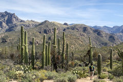 Hiking in Tucson Arizona Stock Images