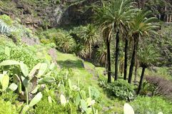 Hiking in the Valle Gran Rey on La Gomera. Stock Images