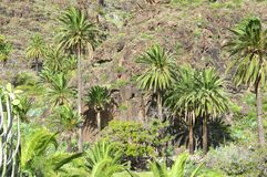 Hiking in the Valle Gran Rey on La Gomera. Royalty Free Stock Image