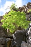 Hiking in the Valle Gran Rey on La Gomera. Stock Photography