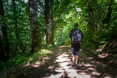 Hiking in the virgin forests of Montenegro Stock Images